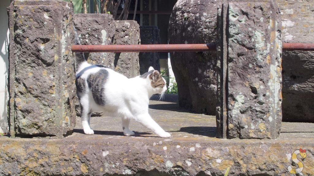 長野市篠ノ井からねこ神社
