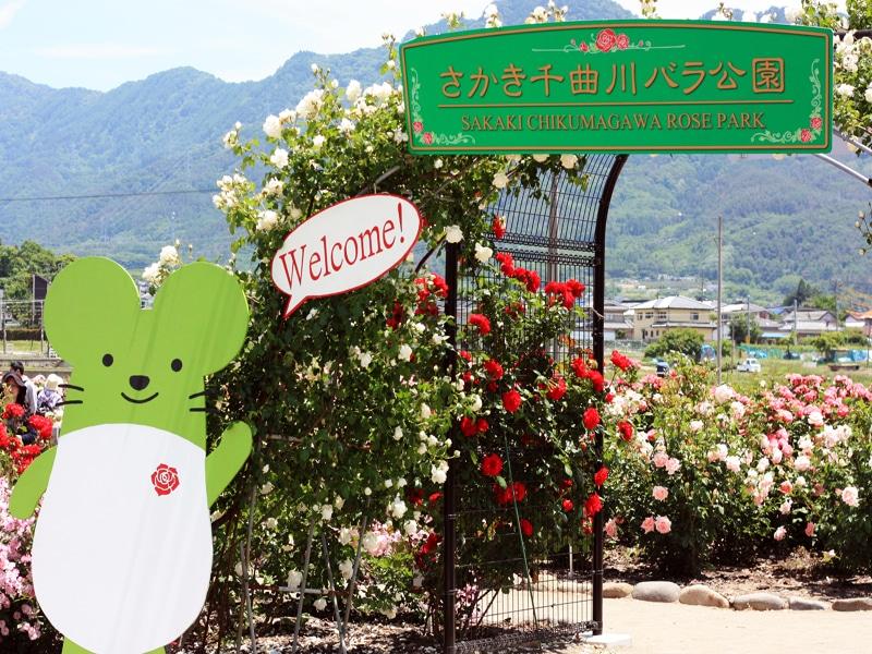 さかきばら祭り さかき千曲川バラ公園