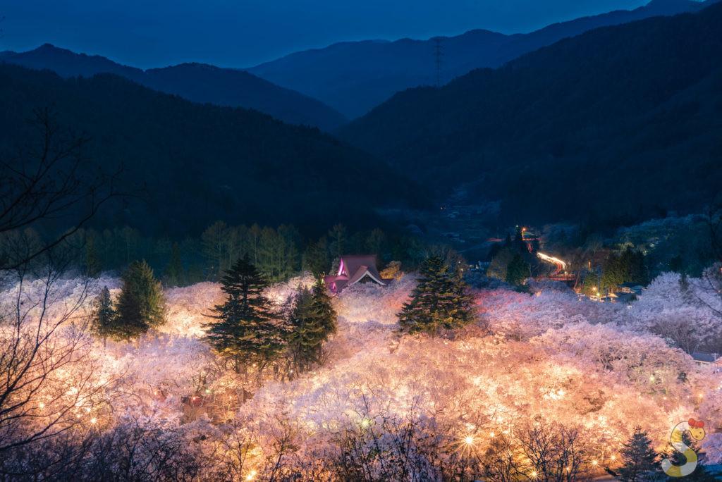 伊那市高遠の桜