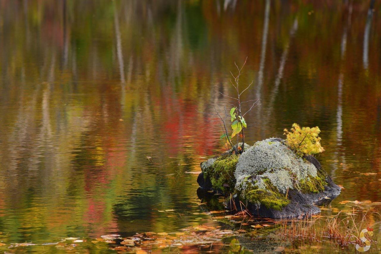 松本市乗鞍高原まいめの池