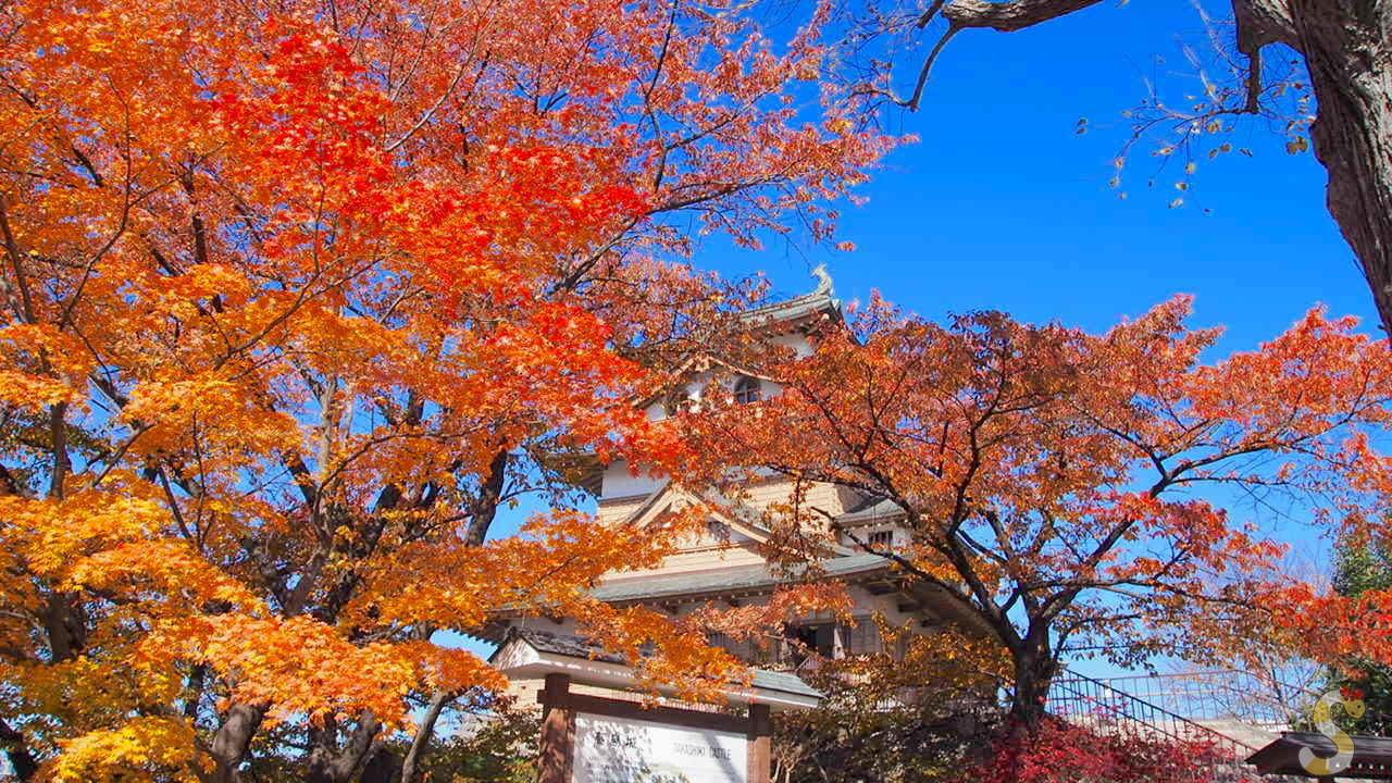 諏訪の高島城と紅葉