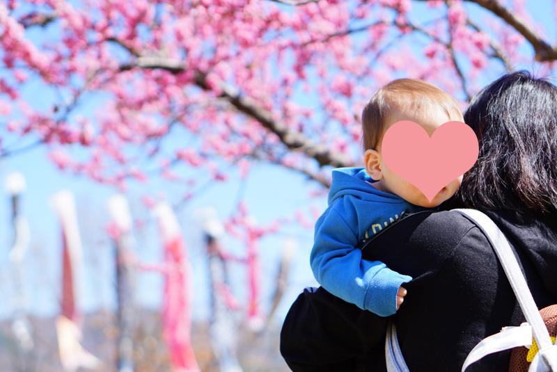 科野の里歴史公園 花桃とこいのぼりを撮影