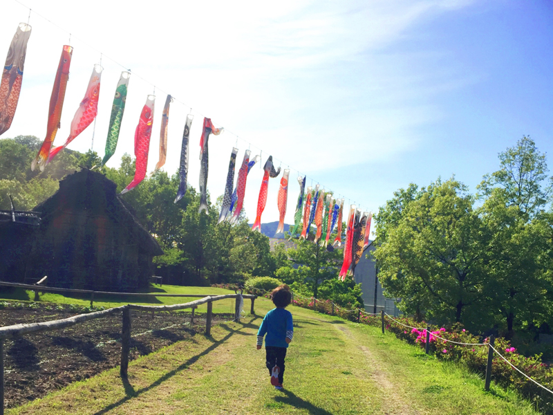 科野の里歴史公園 こいのぼりの下を走る子ども