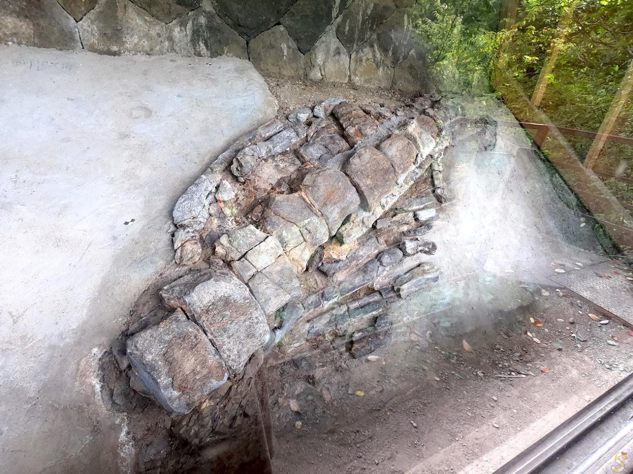 四賀村クジラの化石