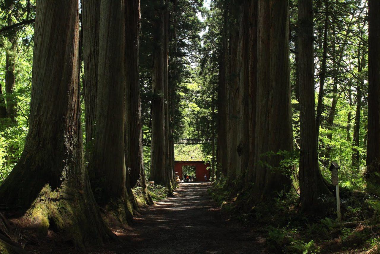 長野市戸隠神社