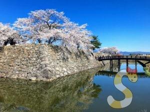 長野市松代城の桜