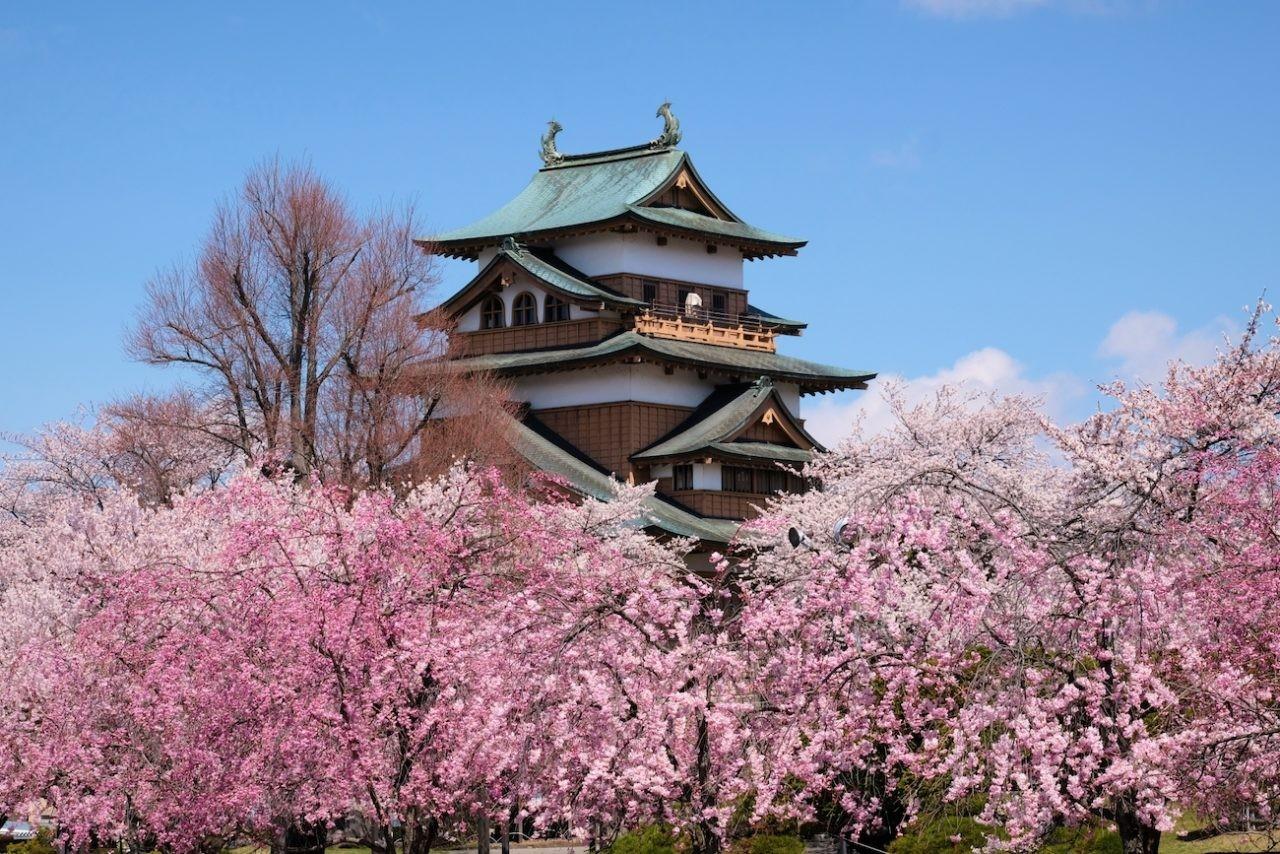 高島城の桜(諏訪市)
