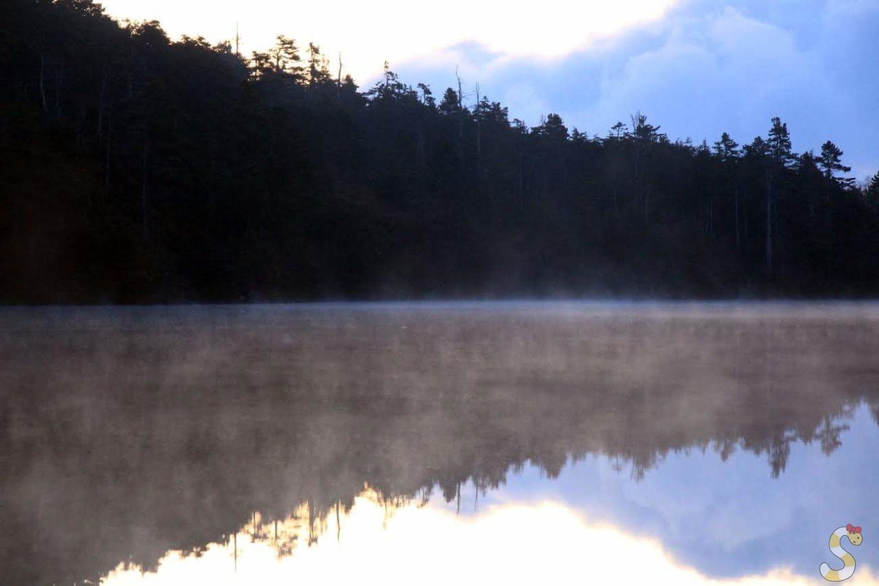 長野県白駒の池