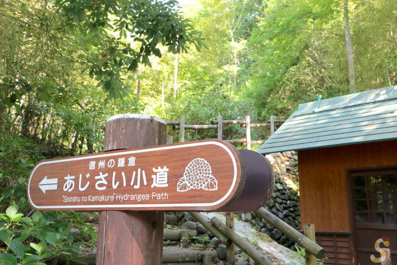 上田市のあじさい小道