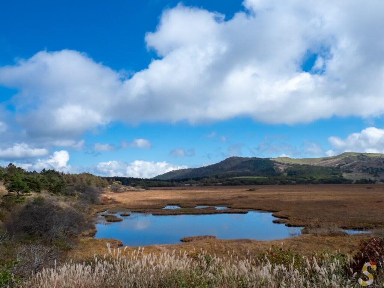 ビーナスライン下諏訪町八島湿原